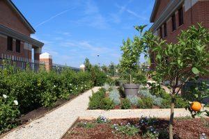 SD Studio progetazzione di un Giardino Formale a Roma in zona Bufalotta per un cliente privato. Nella foto si vede lo spazio
